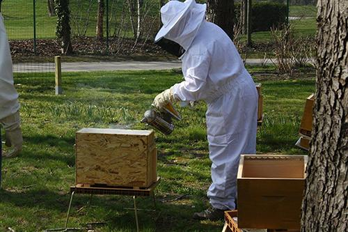 Production du miel - Relais de La Malmaison